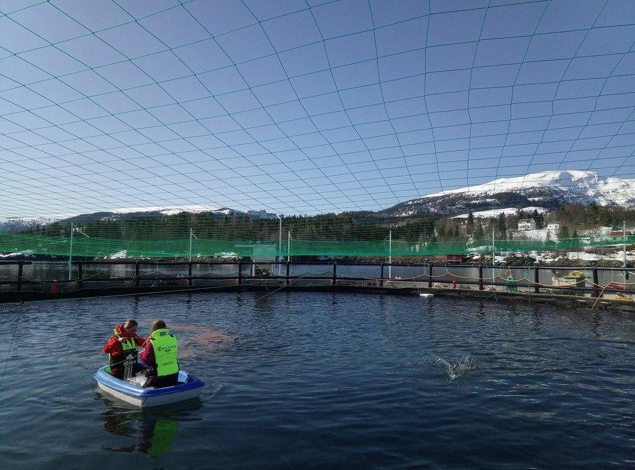 Vannprøvetaking i lukket merd med volum på 6000 m3 på FoU-lokaliteten Sæterosen. Foto: Arve Nilsen.