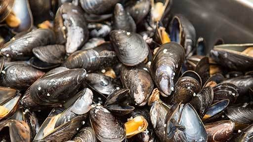 Financial mussel: The Seafish web tool allows seafood businesses such as shellfish farmers to quickly work out what they are eligible for.