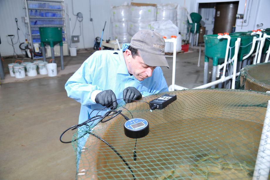 Her ved Center for Aquaculture Technologies (CAT) har man utviklet teknologien som skal hjelpe AquaBounty å sikre at all fisken blir 100 % steril. Foto CAT.