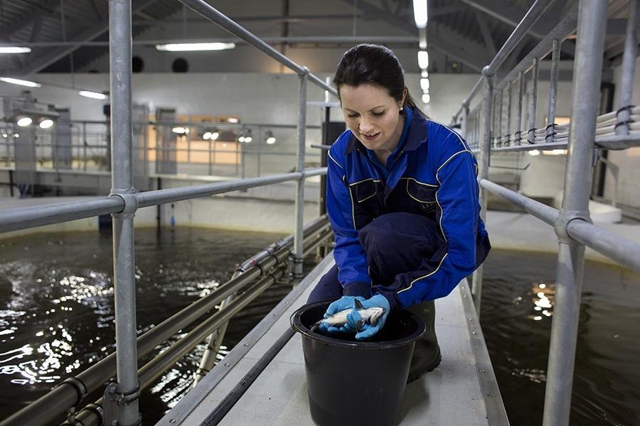 Julia Fossberg Buhaug er biologisk ansvarlig ved RAS-anlegget Belsvik i Hemne kommune. Foto: Lerøy Midt.