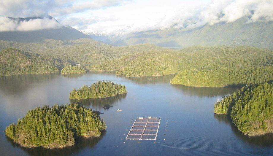 A Cermaq farm near Tofino, Vancouver Island. Cermaq had lice problems in BC and also had to increase antibiotic use. Photo: Cermaq
