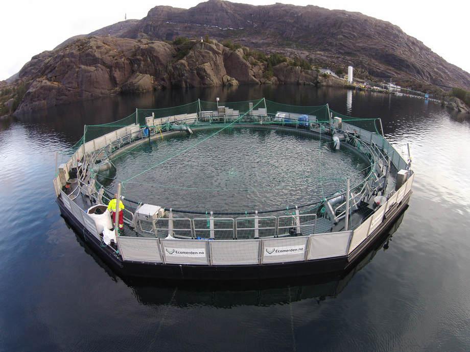 Slik ser Ecomerden til Sulefisk ut, som om berre nokre veker skal få sitt fjerde utsett med fisk. Foto: Sulefisk.