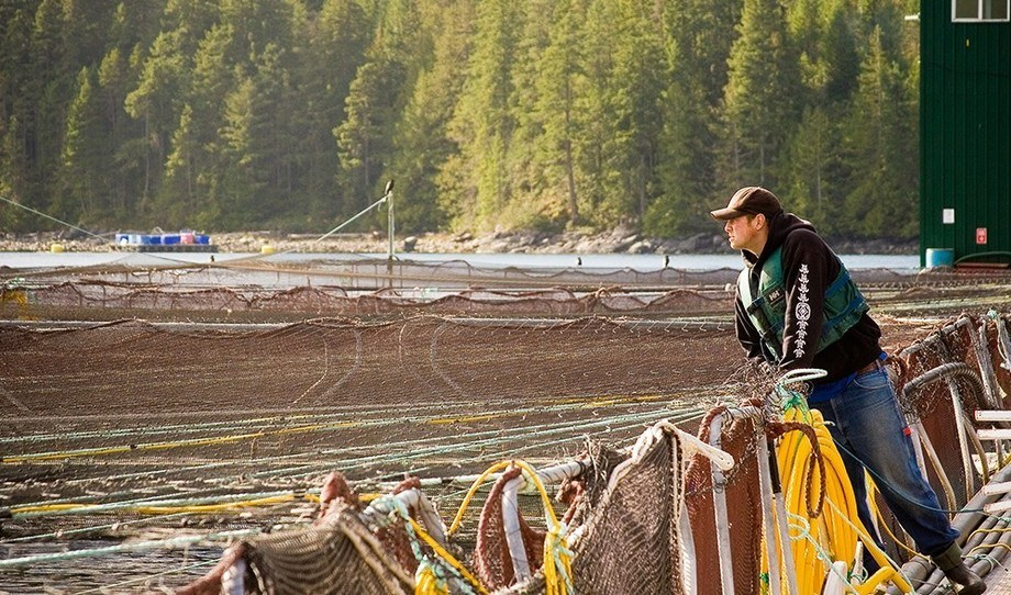 Looking for clarity: salmon farmers hope progress towards an Aquaculture Act will modernise regulation. Photo: BCSFA.