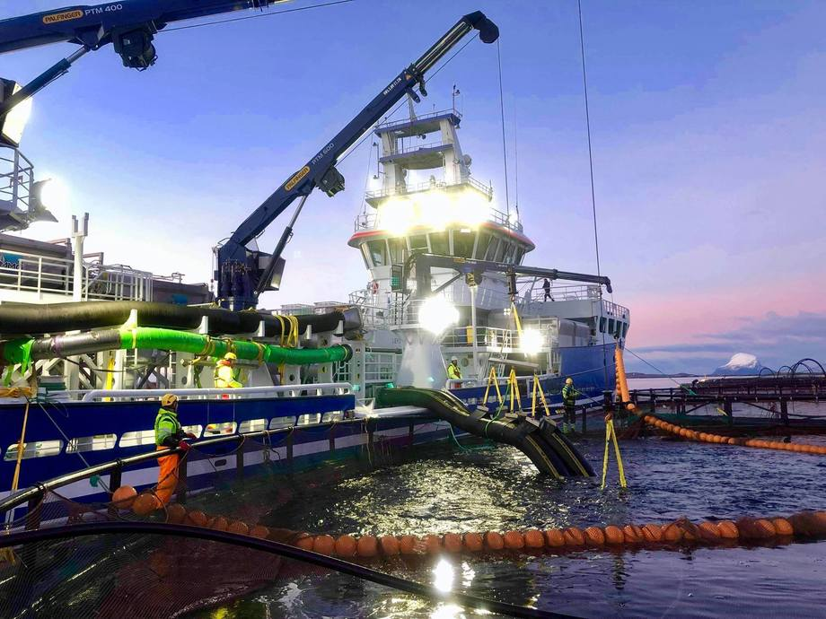 Dess Aquaculture sin brønnbåt «Aqua Tromøy» i arbeid. Foto: Lovundlaks