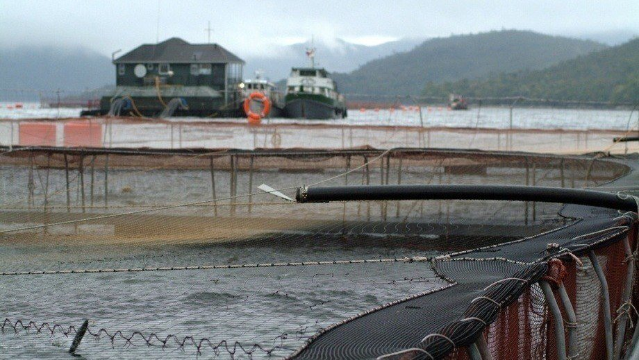 Reference image of a Chilean salmon farm. Photo: Salmonexpert.