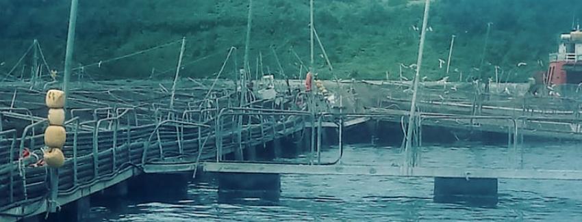 Centro de cultivo de salmón Tubildad de Ventisqueros. Foto: Sernapesca.