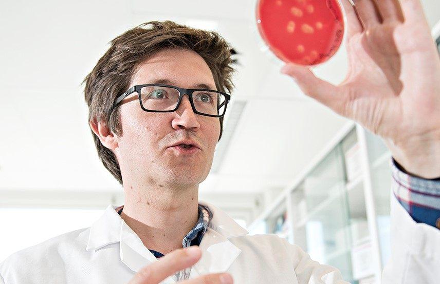 Forsker Christian Karlsen holder fram bakterier hentet fra laks og som er dyrket i laboratoriet til Nofima. Foto: Jon-Are Berg-Jacobsen.
