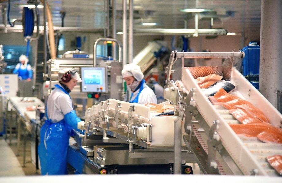 SinkabergHansen har i dag 35 ansatte knyttet til selskapets filetproduksjon ved fabrikken på Marøya. Samtidig ligger et stort potensial til flere ansatte og høyere verdiskaping gjennom økt foredling. Foto: SinkabergHansen