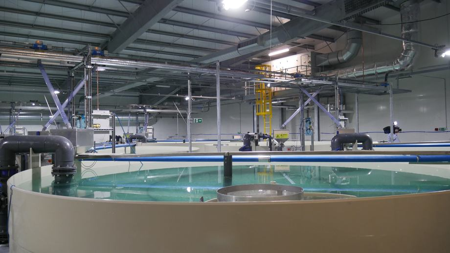 Ozone remains the best treatment for water in recirculating aquaculture systems, US researchers concluded. Photo: FFE.