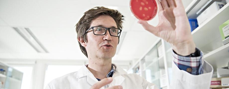 El científico Christian Karlsen sostiene bacterias tomadas del salmón y cultivadas en el laboratorio de Nofima. Foto: Nofima.