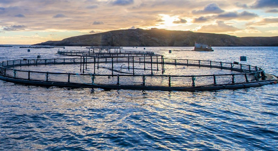 Innovators are being offered up to £300,000 to fund feasibility studies and projects that can improve aquaculture.
