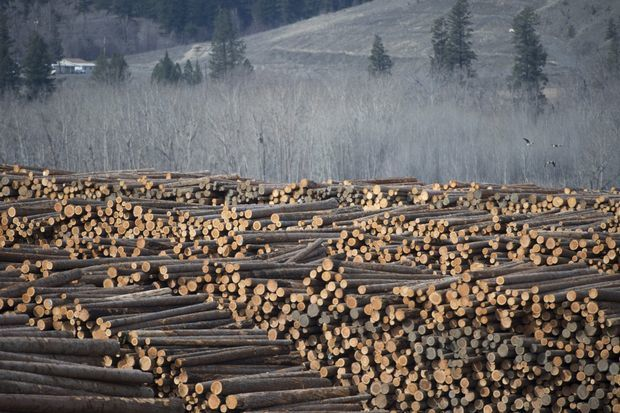Piles of  natural wood from Canada. Image: Globe and mail