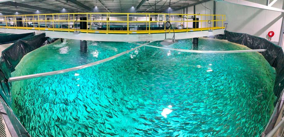 Huon's Whale Point nursery is producing bigger, more robust smolts that spend less time in the sea. Photo: Huon.