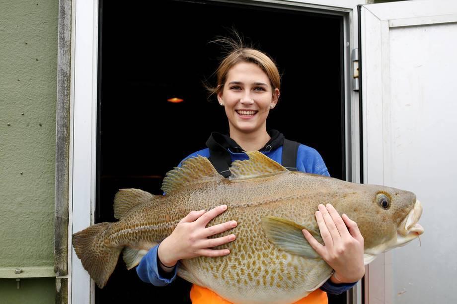Denne saken var en av de mest leste i januar. Her holder lærling Stine P. Standal en stor torsk som er førstegangsgyter på 20 kg. Torsken er femte generasjon fisk fra Havlandet stammen. Nå blir den forelder til sjettegenerasjon. Foto: Eivind Hauge.