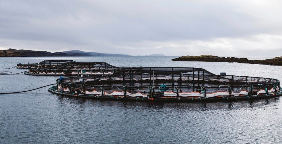 Fish farmers will have to include an environmental monitoring plan when applying to open a new farm. Photo: Scottish Sea Farms.