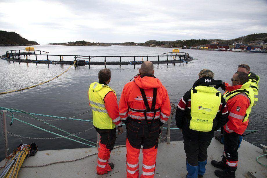 Prosjektteamet i diskusjon under testing av Atlantis Subsea Farming sitt utviklingskonsept. Foto: Atlantis Subsea Farming.