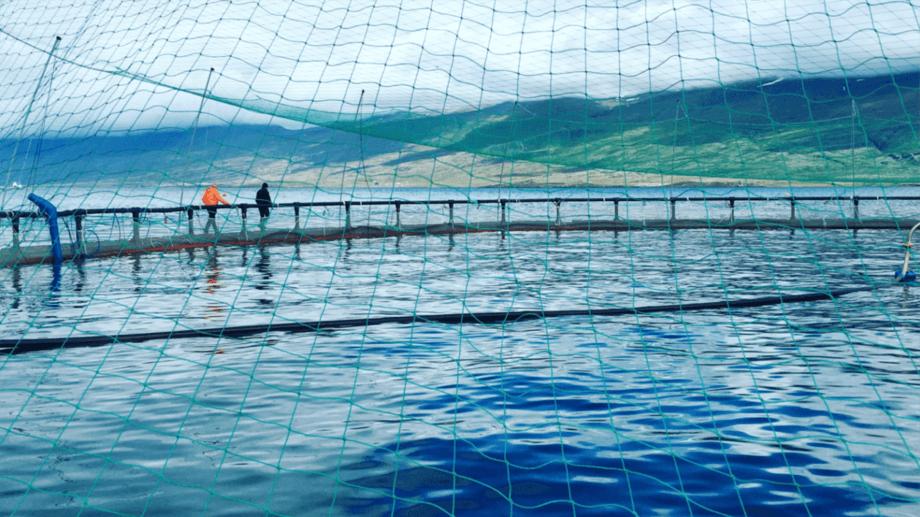 Iceland salmon farmer Ice Fish Farm is now ready to enter Olso Stock Exchange's Merkur list. Photo: Ice Fish Farm.