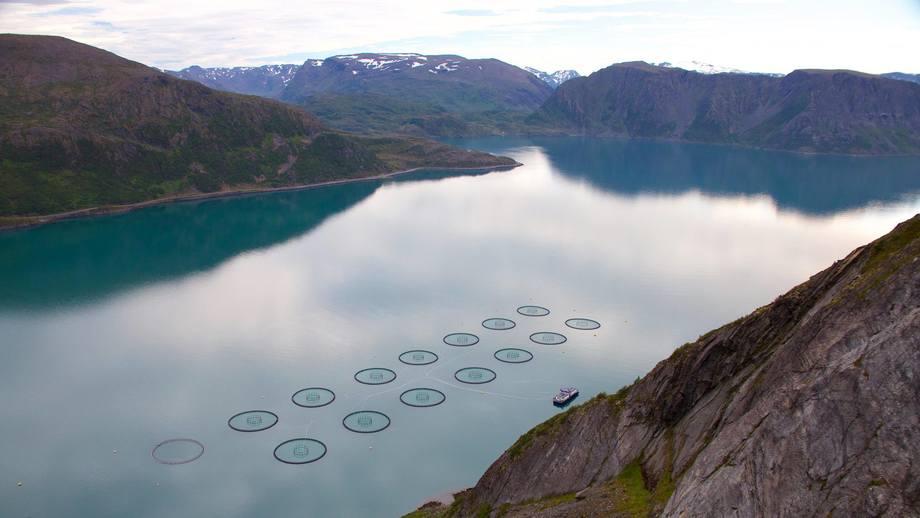 Grieg Seafood slaktet nesten 25 % mer i Finnmark i Q4 2018 sammenlignet med året før. I kombinasjon med god kvalitet på fisken fikk de en EBIT/kg på 20,07 kr/kg mot 11,90 i Q4 2017. Foto: GSF/Trude Elisabeth Østvedt