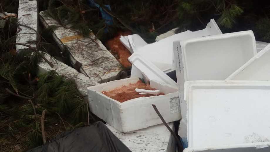 Salmón en descomposición encontrado en un vertedero irregular. Foto: Redes sociales del alcalde de Puerto Montt, Gervoy Paredes.