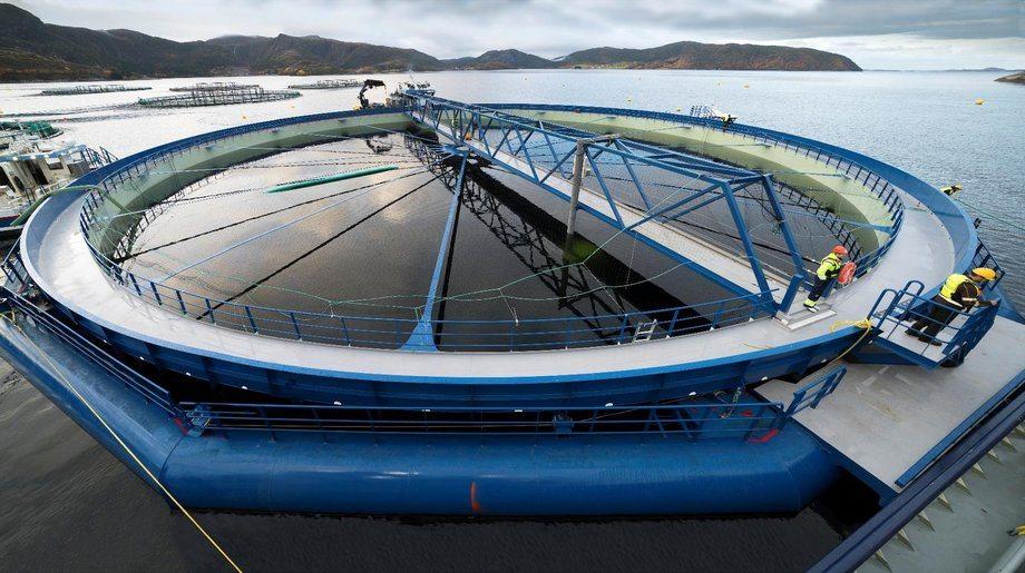 MNH er tildelt fire utviklingskonsesjoner knyttet til Aquatraz-konseptet. Første merd ble levert i oktober 2018. Det er kontrahert fire merder og det forventes at andre merd vil bli tatt i bruk i mars 2019. Foto: MNH.