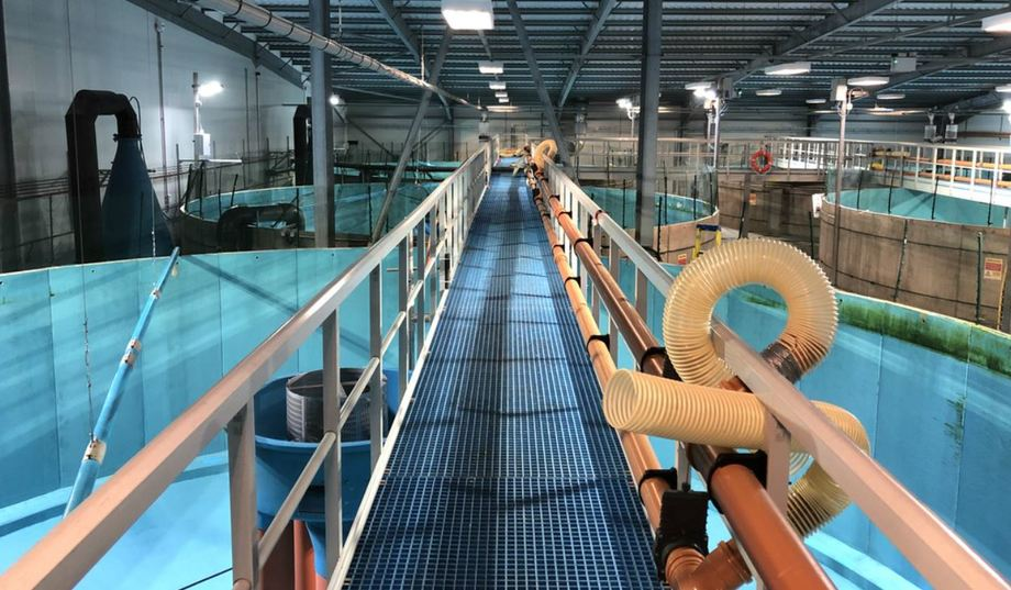 Recirculating aquaculture systems offer advantages but more knowledge is required on the impacts of such rearing systems, says project leader Herve Migaud. Photo: University of Stirling.