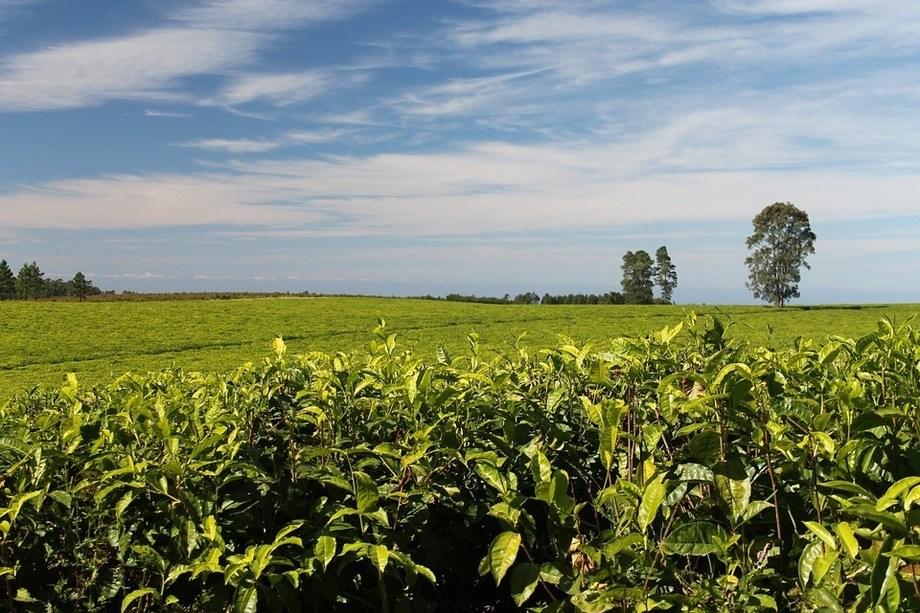 Fomentar la sustentabilidad de actividades agrícolas es uno de los objetivos de las políticas impulsadas por la empresa. Foto: Pixabay.