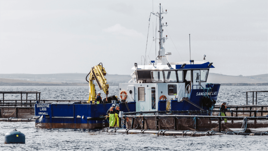 Cages and a workboat at the SSF site at Westerbister, Orkney. The company is to spend more than £3m to equip its new Orkney site at Scapa Flow. Photo: SSF.