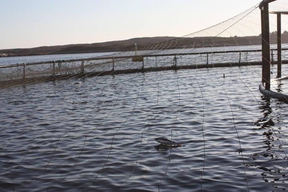 Måsøval aksepterer forelegg på 4,5 millioner for høye lusenivå. Illustrasjonsfoto: Måsøval Fiskeoppdrett.