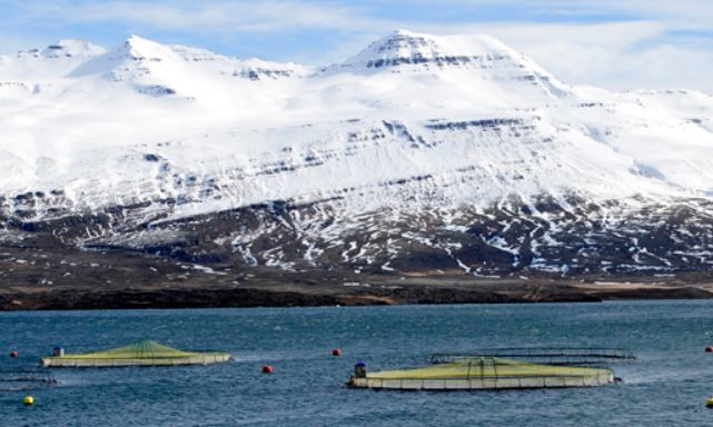 An Ice Fish Farm site on the east coast of Iceland. Photo: Ice Fish Farm.