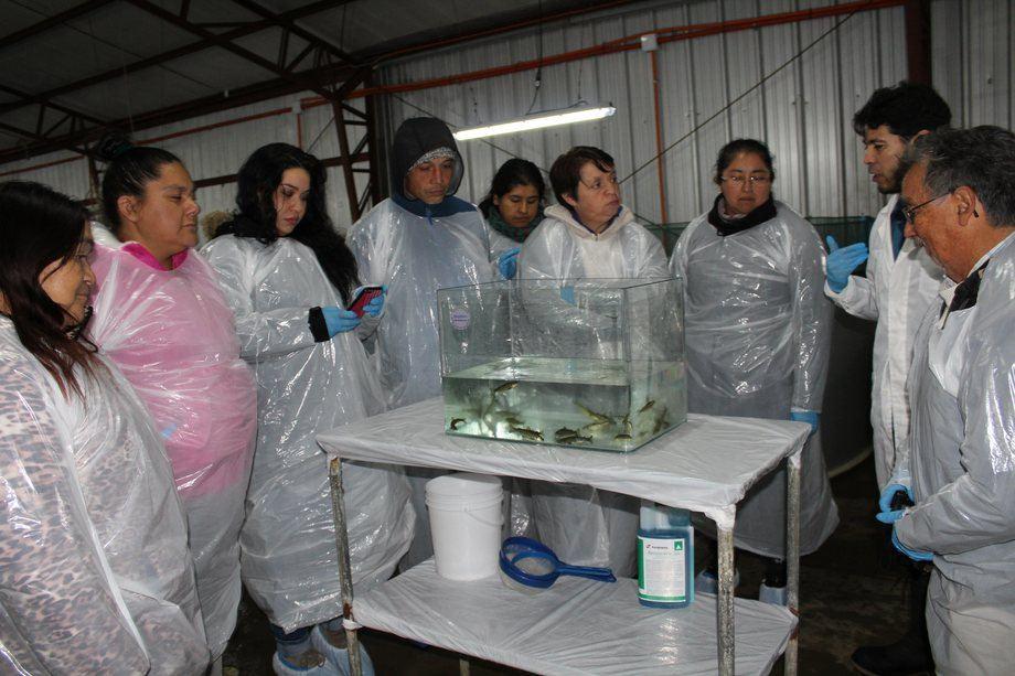 Los visitantes pudieron conocer todo el trabajo que se realiza en una piscicultura de recirculación. Foto: Asociación Salmonicultores de Magallanes.