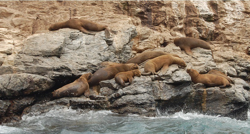 El taller abordará normativas de protección para mamíferos marinos. Foto: Archivo Salmonexpert.