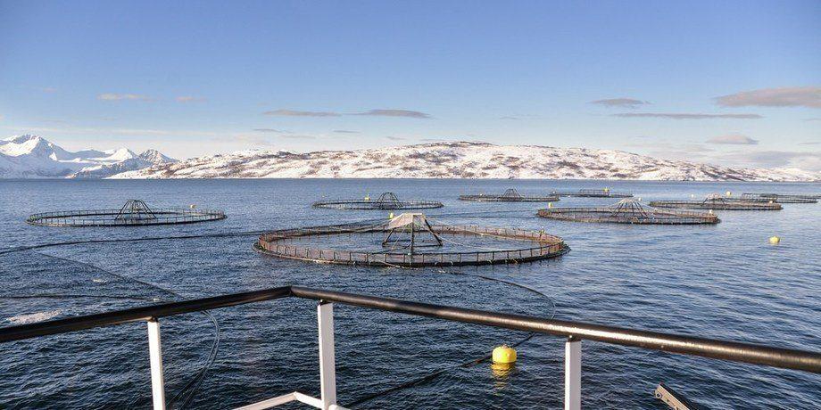 Imagen referencial de centro de cultivo de salmón en Noruega. Foto: Kyst.no.