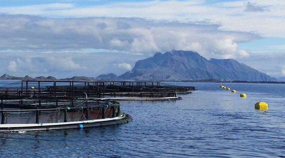 På Dønna på Helgelandskysten hadde landets største forsøk- og forskningssenter LetSea en problemstilling som måtte løses knyttet til vannkvalitet og rognkjeks. NTNU-student Mari Båtnes Birkeland er på saken. Foto: LetSea.