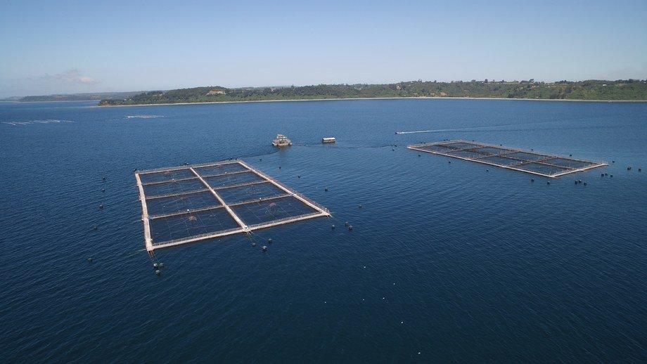 Centro de cultivo de salmón Huenquillahue de AquaChile. Foto: AquaChile.