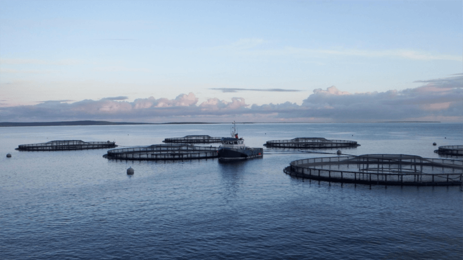 Scottish Sea Farms harvested most of its Q1 volume from Orkney. Photo: Fusion Marine.