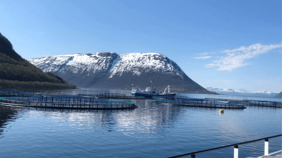 El centro de cultivo ubicado en Ytre Stræte en Astafjorden, fotografiado el 20 de mayo, donde Nordlaks ha perdido hasta 1,3 millones de peces. Foto: Nordlaks.