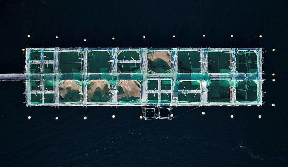 Illustrasjonsfoto: Havforskningsinstituttet sitt oppdrettsanlegg i Austevoll  Foto: Halfdan Hallseth / Havforskningsinstituttet