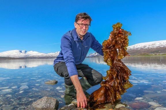 Philip James fra Nofima koordinerer AquaVitae, et EU-finansiert akvakulturprosjekt. Her holder han frem et eksempel på makroalger i Tromsø, der prosjektet starter opp tirsdag 4. juni. Foto: Emil Bremnes/Nofima