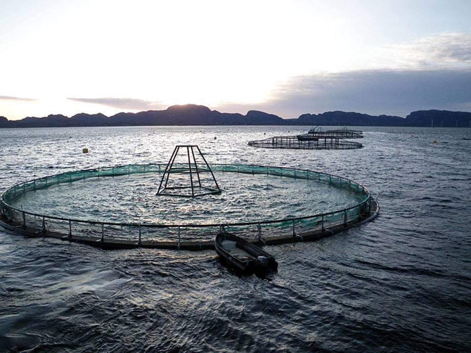 Fiskeridirektoratet vil klargjøre en misforståelse angående havbruksfondet. Illustrasjonsfoto: SINTEF.