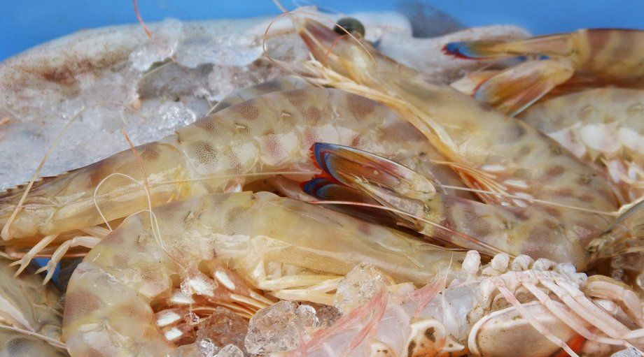 Great British Prawns plans a series of on-land vannamei farms in the UK, beginning in Scotland. Photo: Marc Pascual / Pixabay.