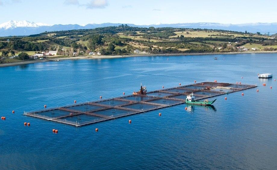 Actividad está orientada a productores, proveedores y distintos actores de la industria del salmón. Foto: Salmofood.