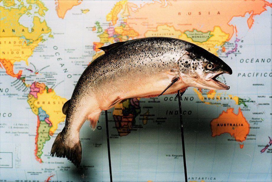 El mercado asiático se está abriendo cada vez más a recibir envíos de salmón chileno. Foto: Archivo Salmonexpert.