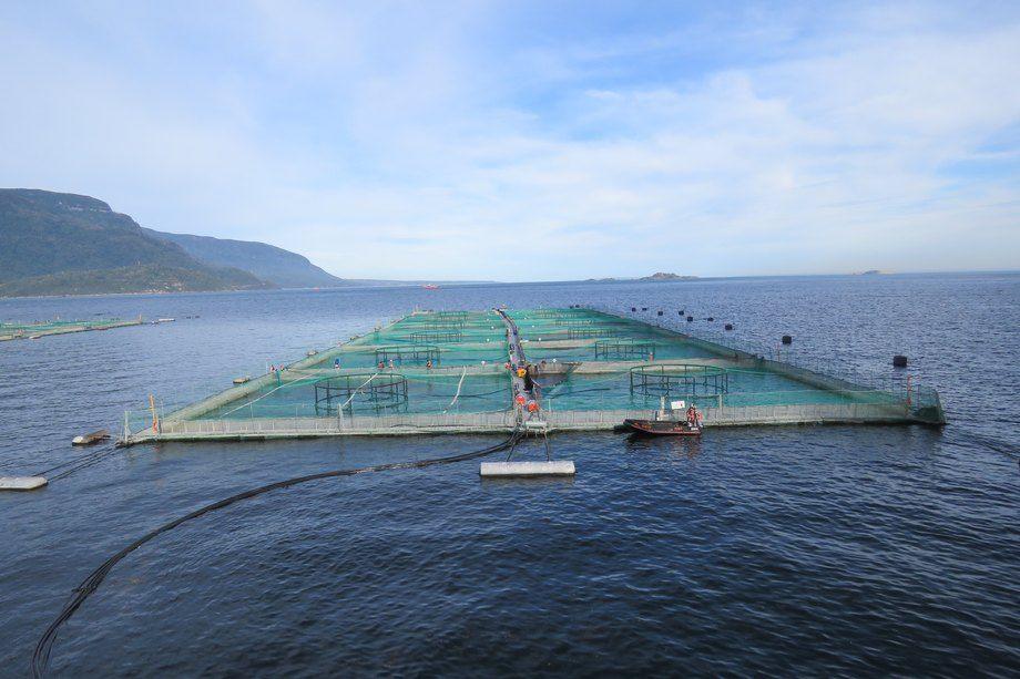 Imagen referencial de centro de cultivo de salmón. Foto: Jonathan Garcés, Salmonexpert.