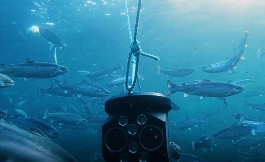 Nå søker Eide Fjordbruk om å kutte ut manuell lusetelling og erstatte det med automatisk maskin-telling. Foto: Aquabyte.
