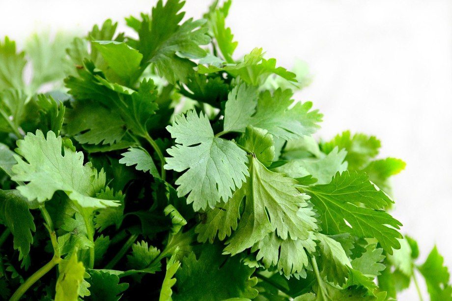 The diet with a 2% inclusion of coriander seed extract was the one with the best results. Photo: Pixabay.