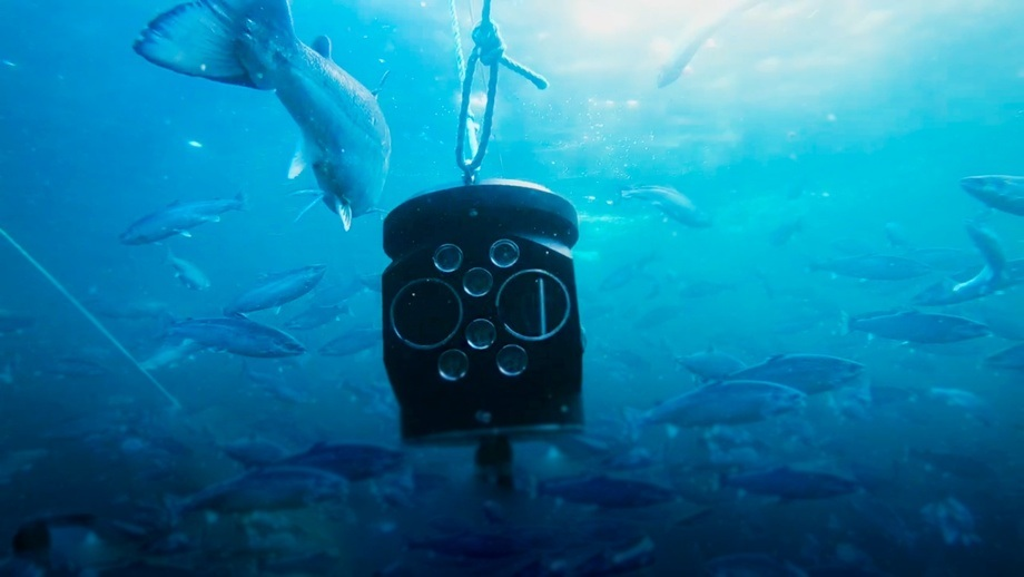 An Aquabyte lice-counting camera system in place in a salmon pen. Image: Aquabyte.