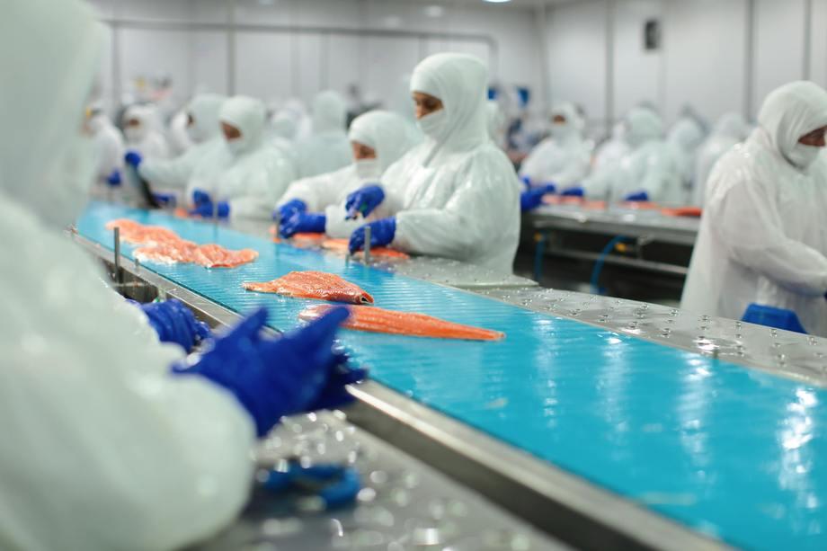Trabajadores de la industria del salmón nacional. Foto: Caleta Bay.