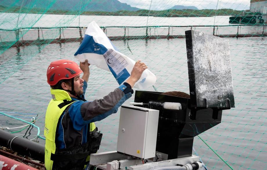 Rognkjeksen i merdene klarer seg ikke bare på å beite lus av laksen. Den må også ha eget fôr, og her fyller driftstekniker Tor Kristian Løvmo opp en av de mange automatene på Lismåsøy ved Brønnøysund. Foto: SinkabergHansen.