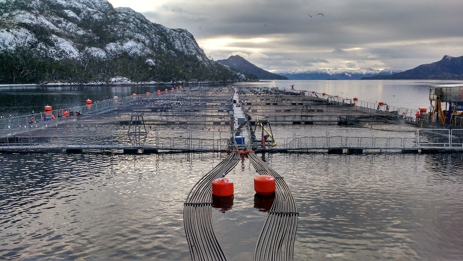 A Nova Austral fish farm. Photo: Salmonexpert.