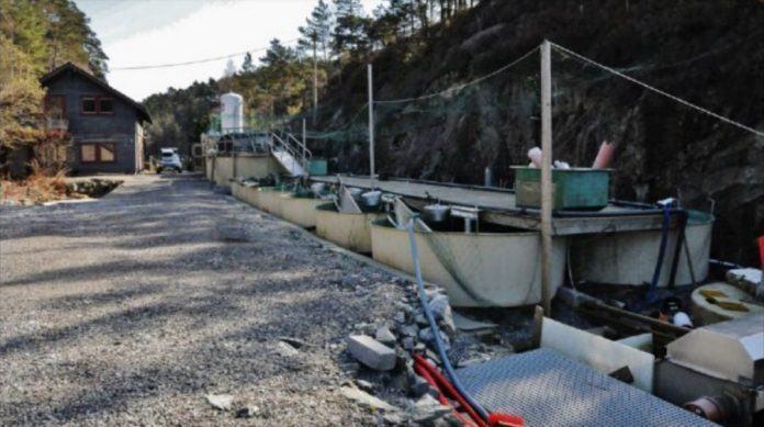 Høye kostnader gjør at det lille selskapet Dåfjorden Klekkeri ser røde tall i regnskapsboken. Foto: Dåfjorden Klekkeri.